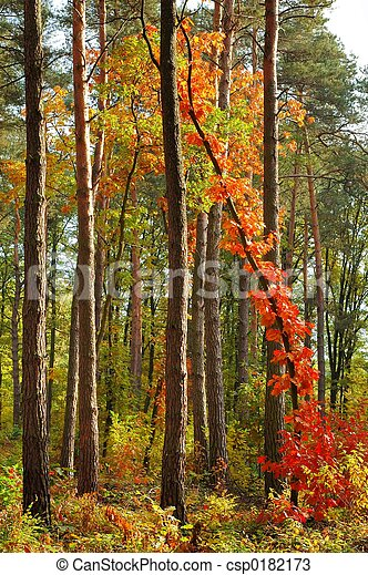 Colors of Fall - csp0182173