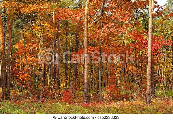 Colors of Fall - csp0238333
