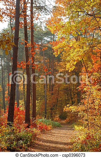 Colors of Fall - csp0396073