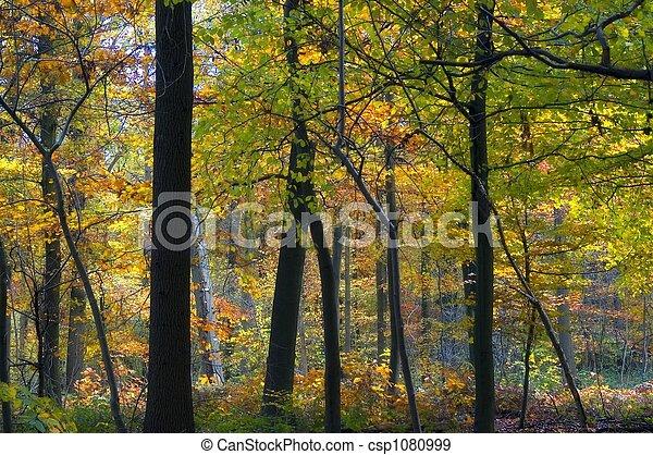 colourful autumn forest - csp1080999
