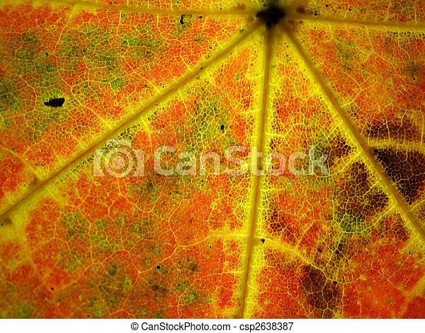 Colourful autumn leaf - csp2638387