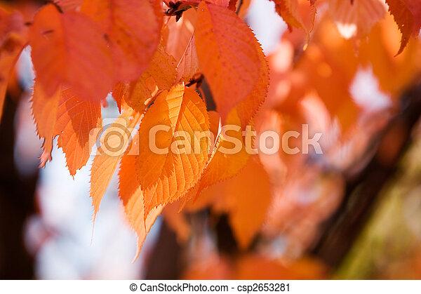 Colourful autumn - csp2653281