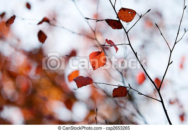 Colourful autumn - csp2653265