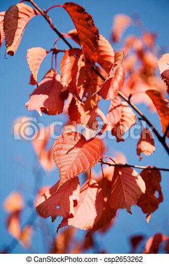 Colourful autumn - csp2653262