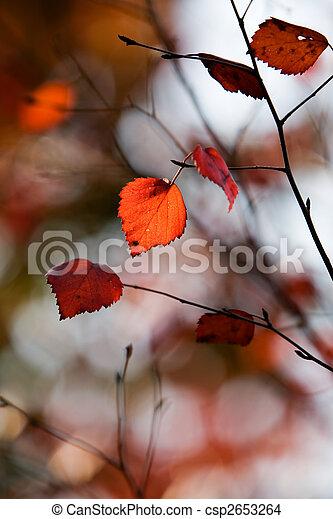 Colourful autumn - csp2653264