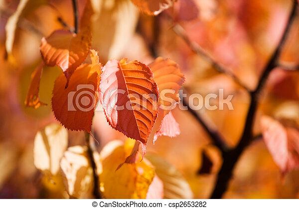 Colourful autumn - csp2653282