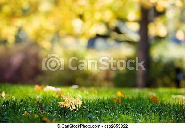 Colourful autumn - csp2653322