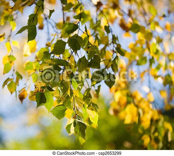 Colourful autumn - csp2653299