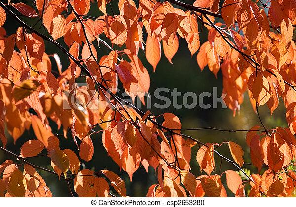 Colourful autumn - csp2653280