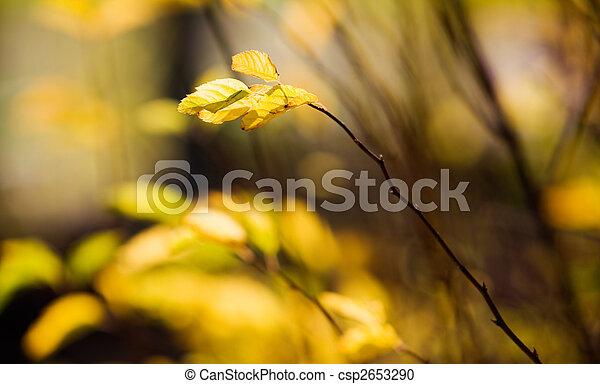 Colourful autumn - csp2653290