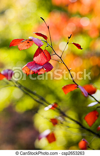 Colourful autumn - csp2653263