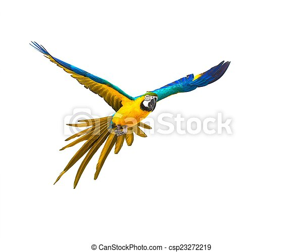 Colourful flying parrot isolated on white  - csp23272219