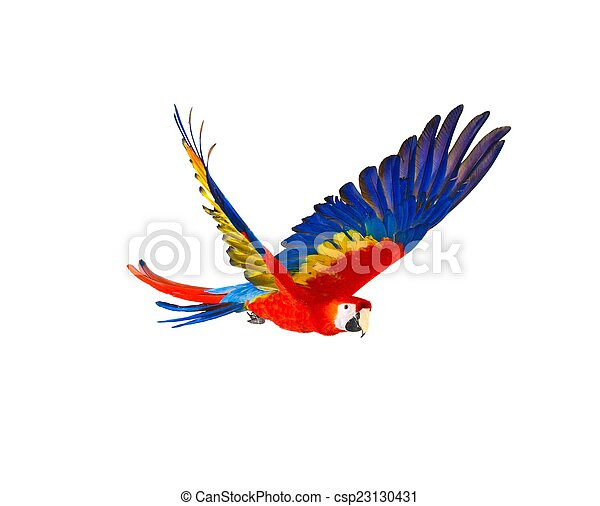Colourful flying parrot isolated on white - csp23130431