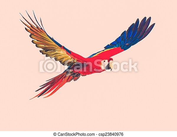 Colourful flying parrot toned - csp23840976