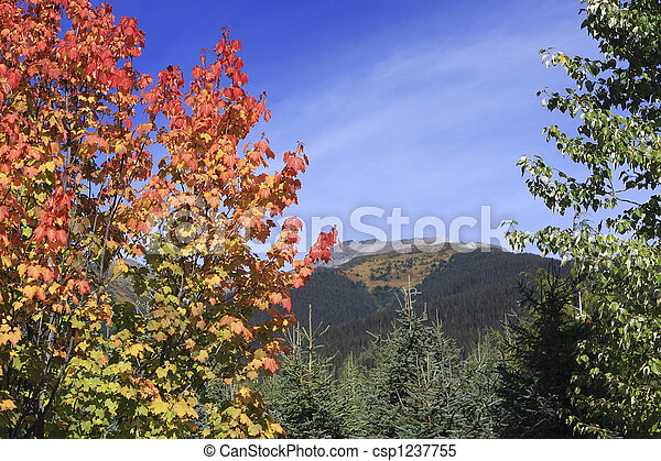 Colourful Maple Bush With Mountain Landscape In Background