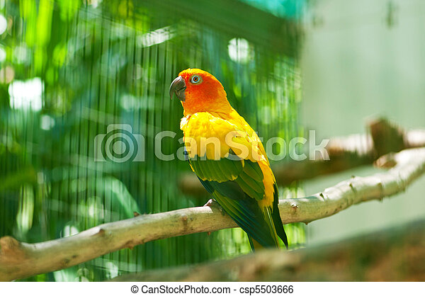 Colourful parrot bird sitting on the perch - csp5503666
