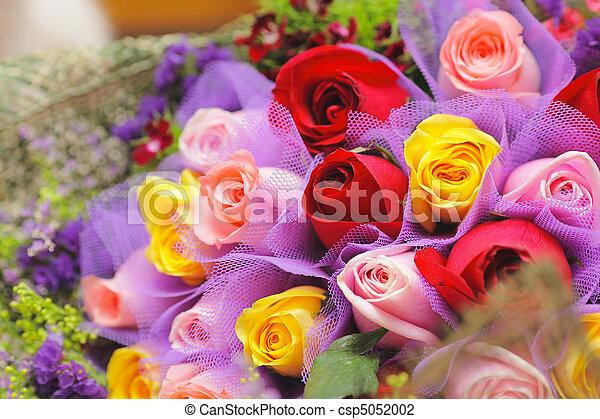 colourful rose - csp5052002