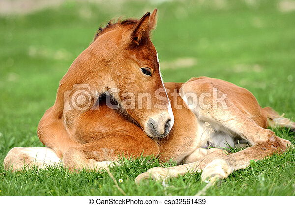 Colt on a meadow - csp32561439