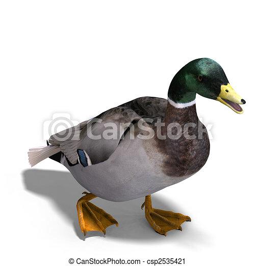 Colvert m le canard coupure sur rendre sentier - Illustration canard ...
