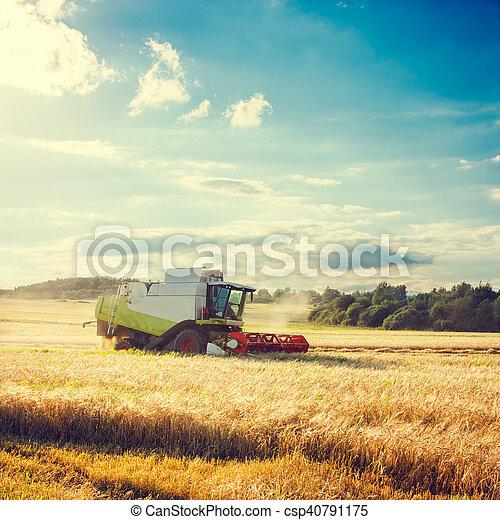 combinar, agriculture., trigo, field., segador - csp40791175