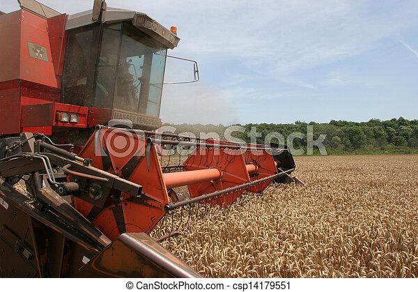 Combinando trigo - csp14179551