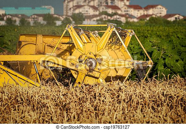 Combinando trigo - csp19763127