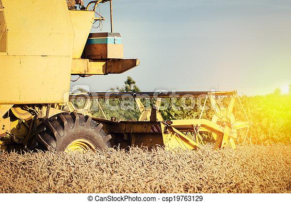 Combinando trigo - csp19763129