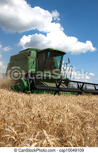 Combine harvests wheat on a field in sunny summer day - csp10049109