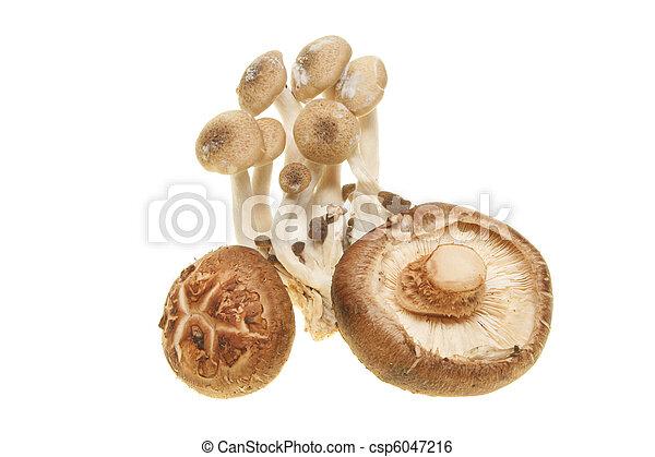 comestível, fungos - csp6047216