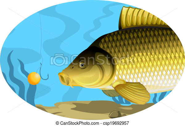 Common carp catching on bait - csp19692957
