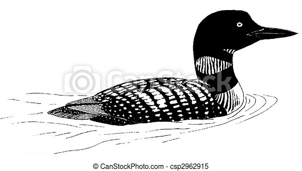 Common Loon - csp2962915