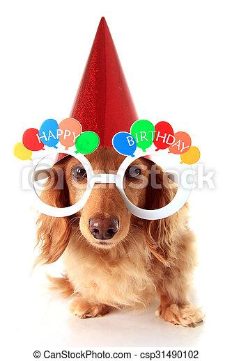 Compleanno Cane Felice Il Portare Felice Occhio Compleanno