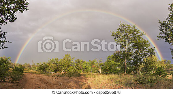 Complete rainbow in the bush after a rain storm - csp52265878