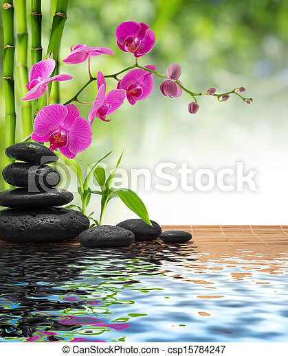 composition bamboo-purple orchid - csp15784247