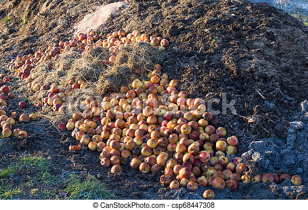 Compost preparation for soil - csp68447308