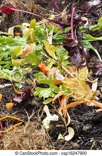 compost - csp16247900