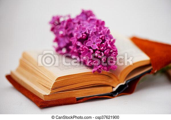 comprehensive, 本, ページ, ライラック - csp37621900
