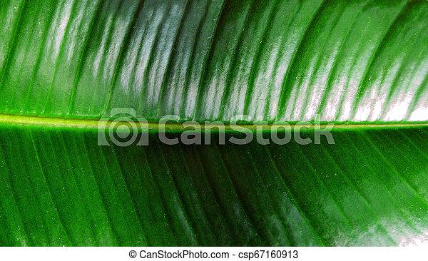conceito, folha, natureza, primavera, folhas, tropicais, experiência., selva - csp67160913