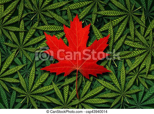 conceito, marijuana, canadense - csp43940014