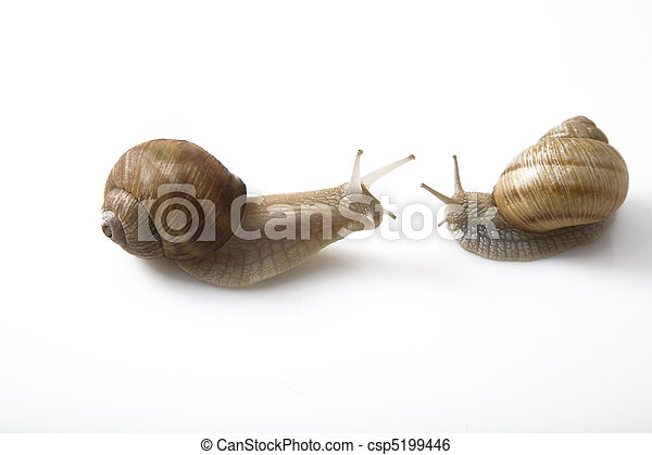 concept, gezicht, communicatie, twee, gezicht, snails - csp5199446