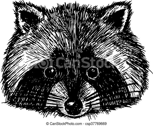 Concept hand drawn cute raccoon. Vector illustration. Design template for greeting cards etc. - csp37769669