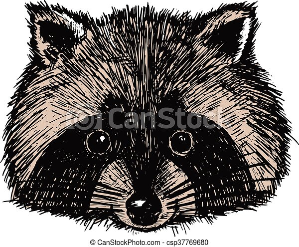 Concept hand drawn cute raccoon. Vector illustration. Design template for greeting cards etc. - csp37769680
