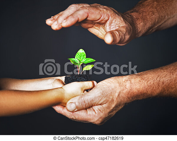 concept of family. Hands of  father and child hold a green plant - csp47182619