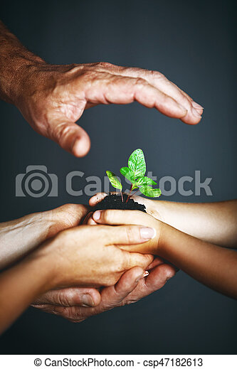 concept of family. Hands of mother, father and child hold a green plant - csp47182613