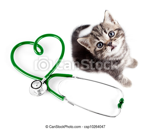 concept, vétérinaire, animaux familiers - csp10264047