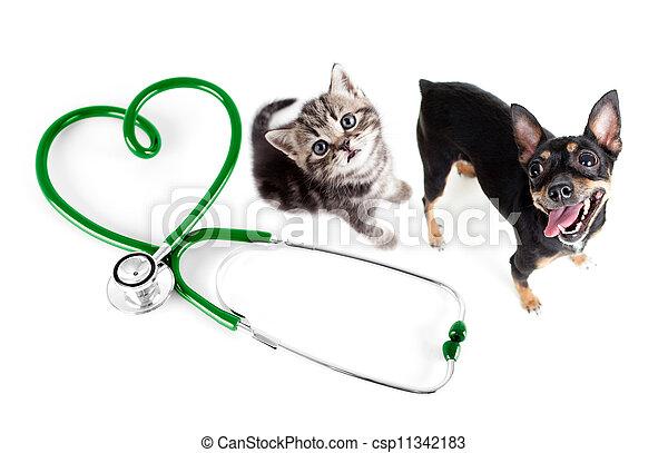 concept, vétérinaire, chats, autre, animaux familiers, chiens - csp11342183