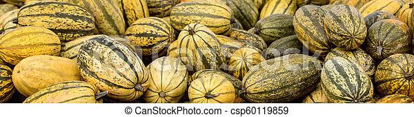 Banner, Spaghetti calabazas de calabaza, cosecha conceptual y tiempo de otoño - csp60119859