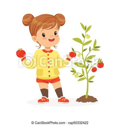 Dulce niña recogiendo tomates en el jardín, niños saludables concepto de comida colorida vector de ilustración - csp50332422