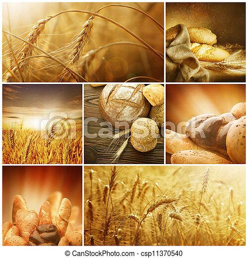 concepts., zboże, collage, żniwa, wheat. - csp11370540