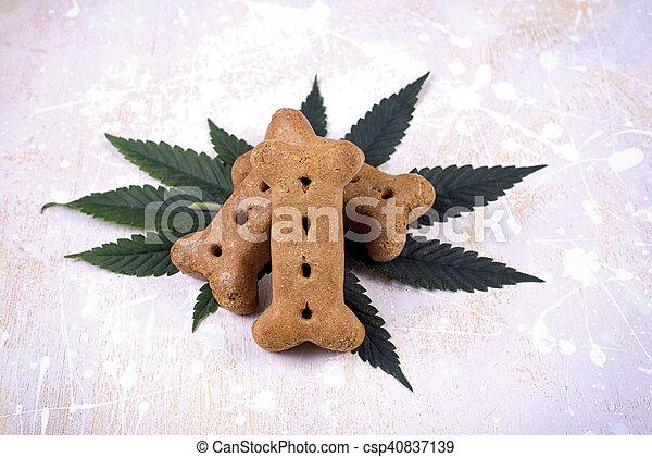 concetto, foglie, -, cane, marijuana, canapa, trattare, animali domestici, medico - csp40837139